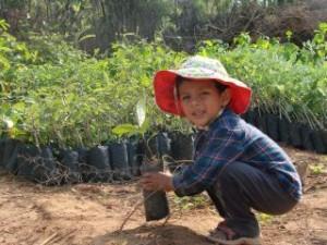3. Aum picks a nice treeling